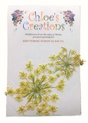 Pressed Flowers - Queen Anne's Lace (1 or 2)